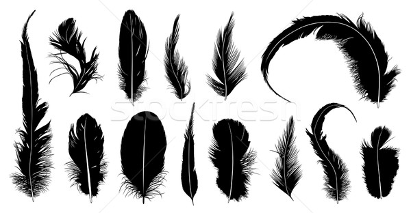 Set of different feathers Stock photo © DeCe