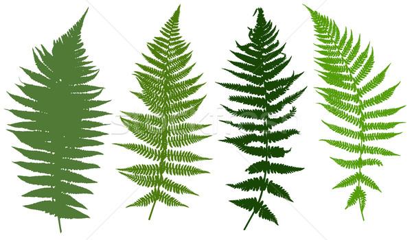 Illustration of different ferns  Stock photo © DeCe