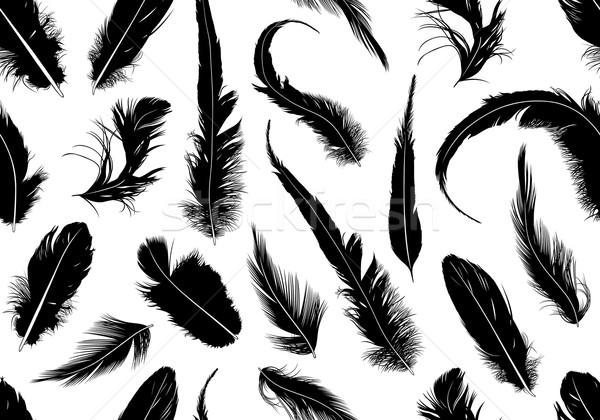 Végtelenített tollak izolált fehér madár csoport Stock fotó © DeCe