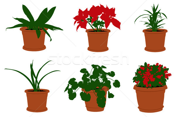 Set of different flowers in pots  Stock photo © DeCe