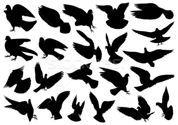 Zestaw inny odizolowany biały ptaków Zdjęcia stock © DeCe