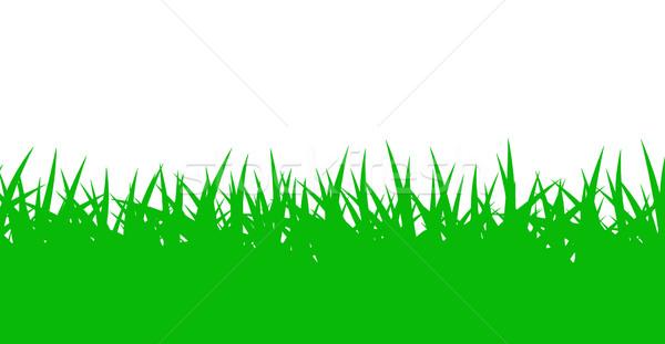 Fű zöld fű izolált fehér textúra tavasz Stock fotó © DeCe