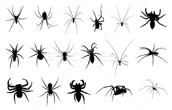 Set of different spiders Stock photo © DeCe
