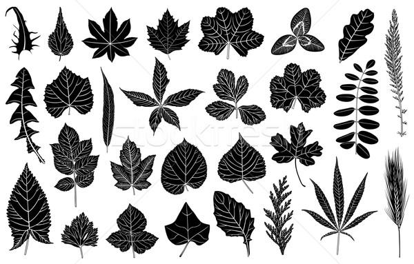 Illusztráció különböző levelek izolált fehér fa Stock fotó © DeCe