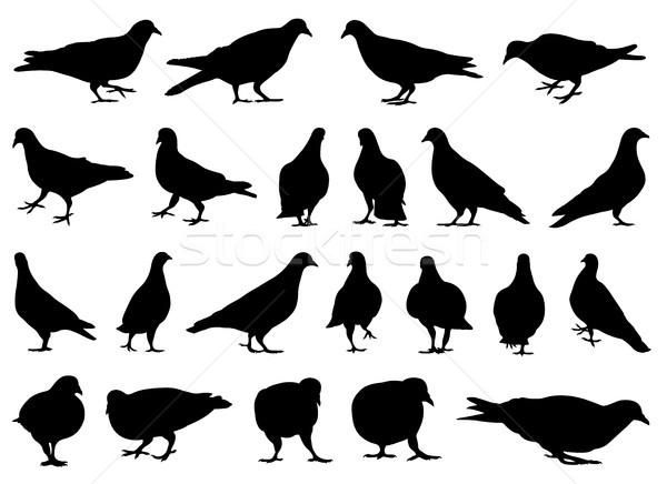 実例 異なる 孤立した 白 鳥 ストックフォト © DeCe