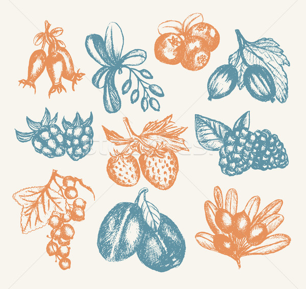 Berries - vector hand drawn vintage illustration Stock photo © Decorwithme