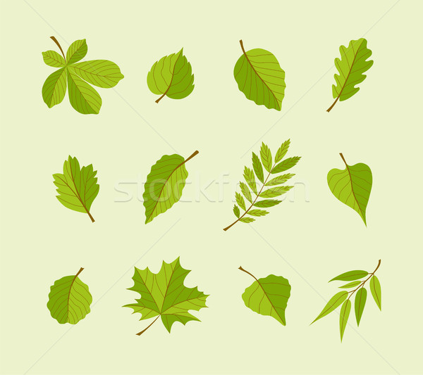 Types of Leaves - modern vector flat design icons set. Stock photo © Decorwithme
