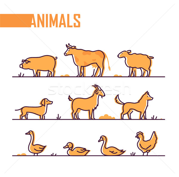 Set of farm animals - line design style colorful illustration Stock photo © Decorwithme