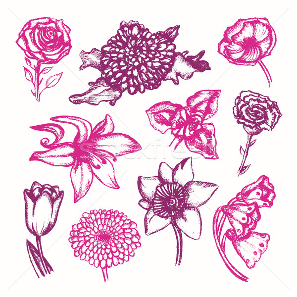 Beautiful Flowers - color hand drawn illustrative composition. Stock photo © Decorwithme