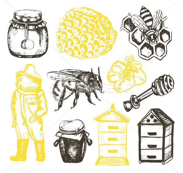Bee tuin illustratie vector vintage kleur Stockfoto © Decorwithme