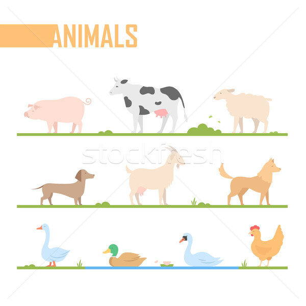 Set of farm animals - modern vector cartoon isolated illustration Stock photo © Decorwithme
