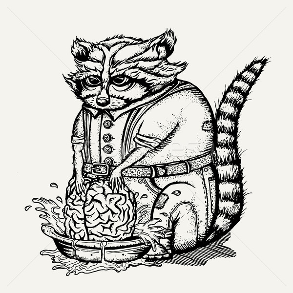 Pen and ink illustration of humanlike raccoon washing brain Stock photo © Decorwithme