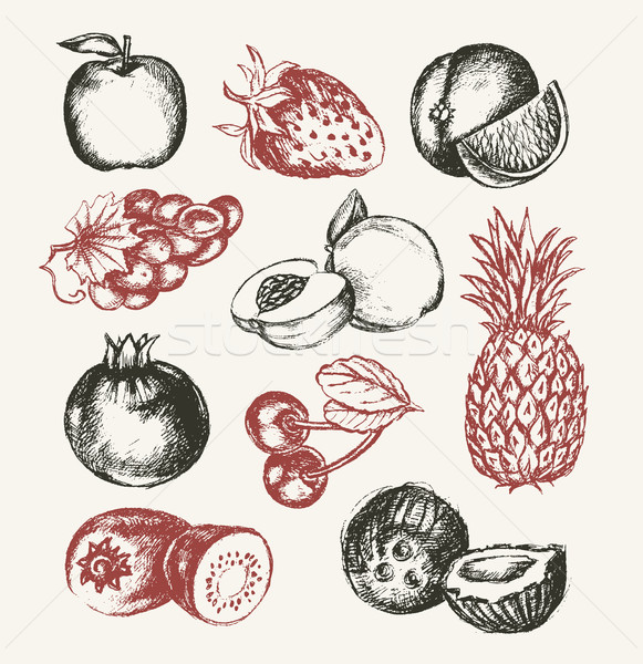 Fruits - vector modern hand drawn design illustrative set. Stock photo © Decorwithme