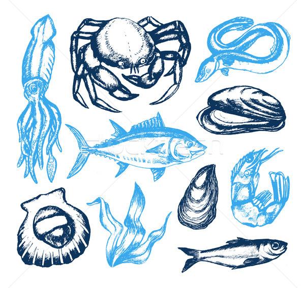 Heerlijk zeevruchten vector vintage illustratie kleur Stockfoto © Decorwithme