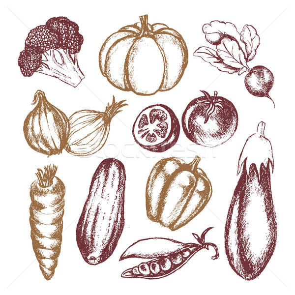 Vegetables - colored hand drawn illustrative composition. Stock photo © Decorwithme