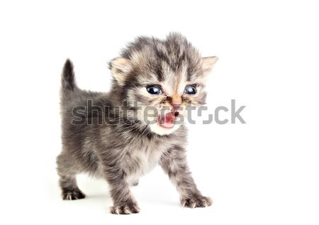 Little kitten Stock photo © DedMorozz