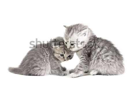 Two little kittens Stock photo © DedMorozz