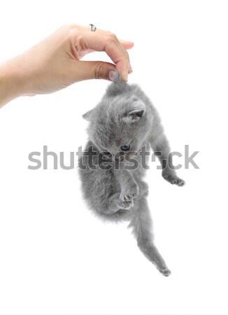 девушки мало котенка киска руки домашние Сток-фото © DedMorozz