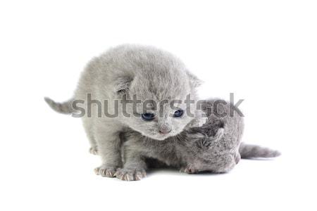 Little kittens Stock photo © DedMorozz