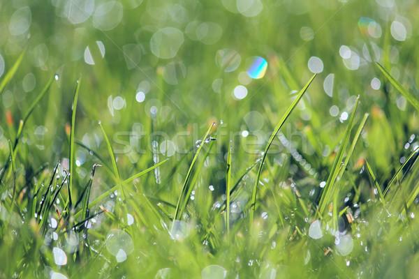 Green vibrant grass Stock photo © DedMorozz