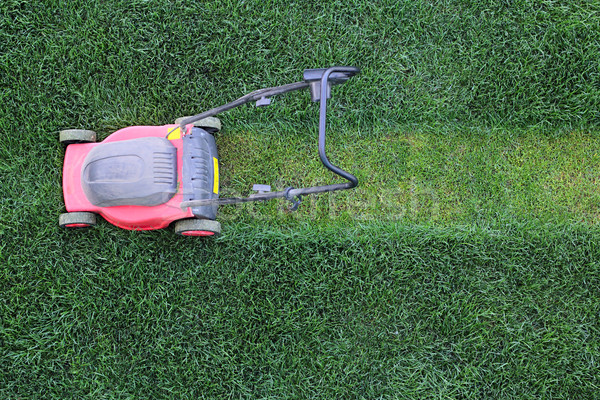 Grass cutter at the lawn Stock photo © DedMorozz