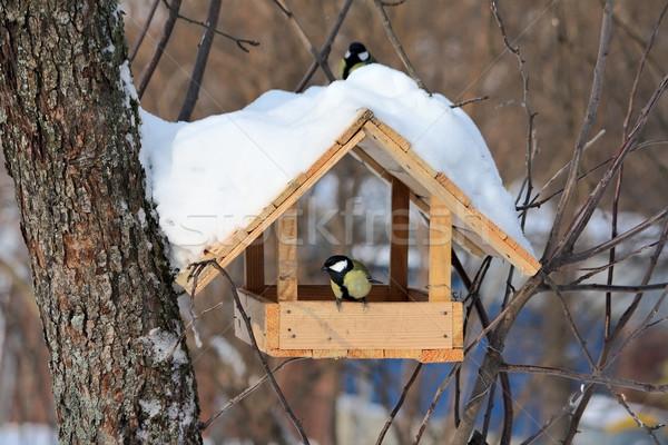 зима парка природы пару снега помочь Сток-фото © DedMorozz