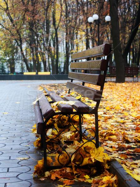 Empty bench in a autumn park Stock photo © DedMorozz