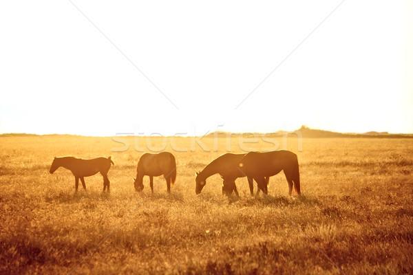Some horses grazing Stock photo © DedMorozz