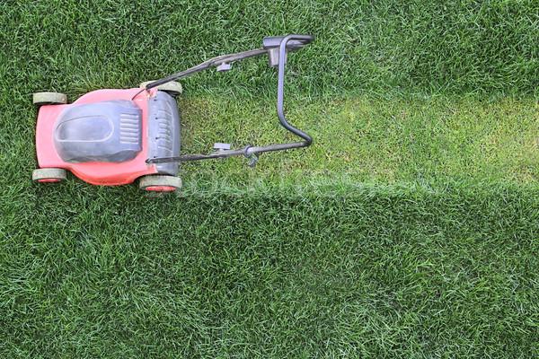 Trawy trawnik zielone charakter krajobraz ogród Zdjęcia stock © DedMorozz