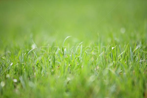 зеленый трава макроса фото зеленая трава Сток-фото © DedMorozz