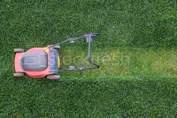 Trawy trawnik zielone charakter tle lata Zdjęcia stock © DedMorozz
