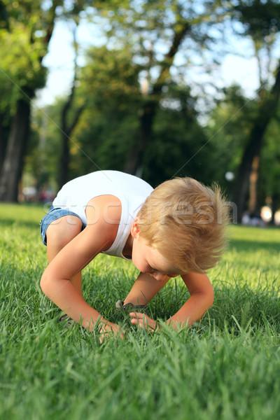 мало мальчика глядя что-то трава потеряли Сток-фото © DedMorozz