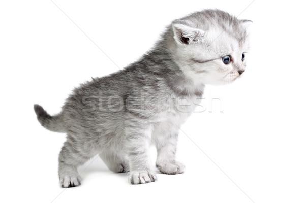 Little kitten looking Stock photo © DedMorozz