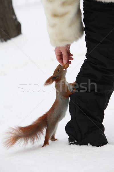 Lány etetés mókus hó város park Stock fotó © DedMorozz