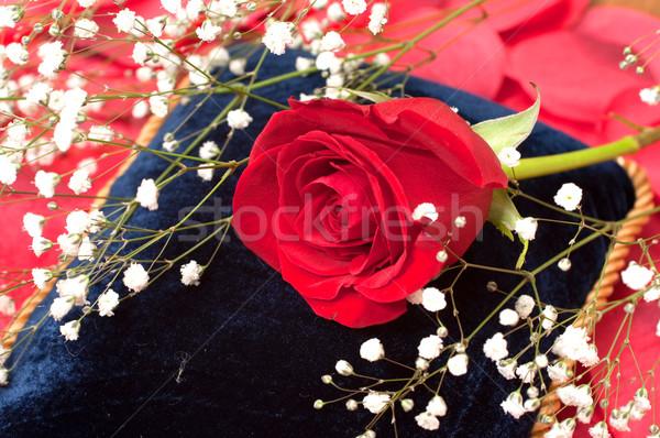 Red Rose on Blue Pillow Stock photo © dehooks