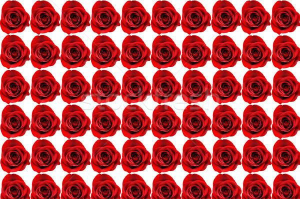 Zestig rozen zes tien geïsoleerd Stockfoto © dehooks