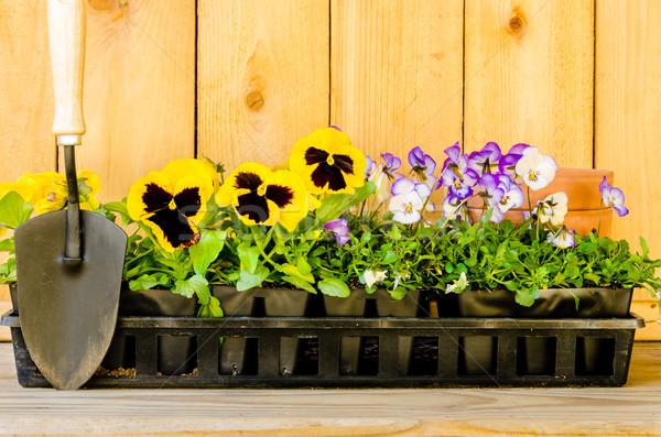 Jardín madera naturaleza Daisy planta Foto stock © dehooks