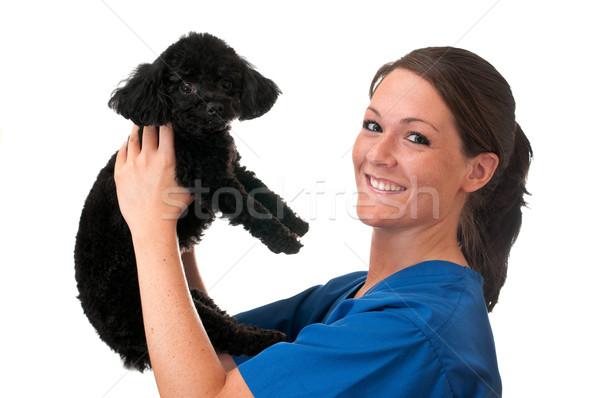 Foto stock: Veterinário · assistente · animal · de · estimação · cão · isolado