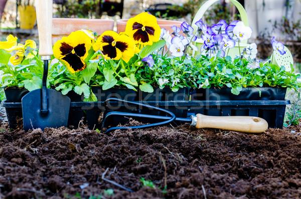 Wiosną ogrodnictwo konewka uprawiany gleby charakter Zdjęcia stock © dehooks