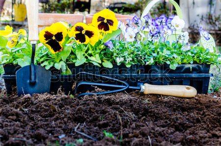 Flores cultivado solo natureza Foto stock © dehooks