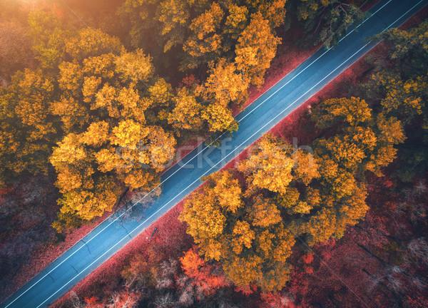 Stock fotó: Légifelvétel · út · gyönyörű · ősz · erdő · naplemente