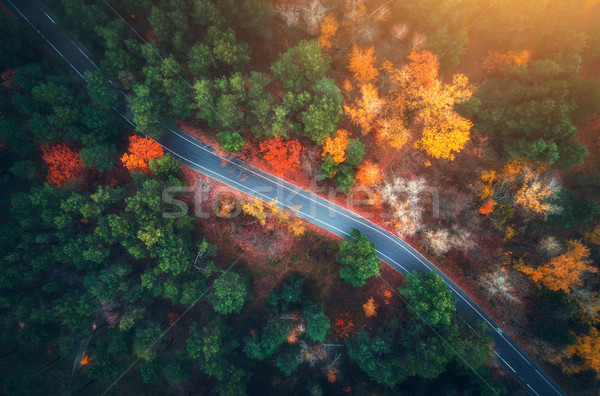 Aerial view of road in beautiful autumn forest at sunset Stock photo © denbelitsky