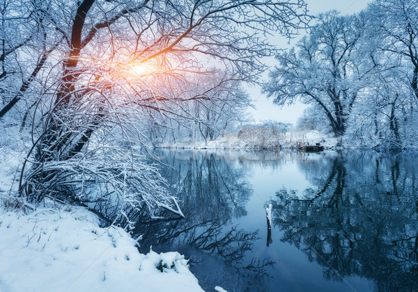 Winter forest on the river at sunset. Colorful landscape with snowy trees Stock photo © denbelitsky