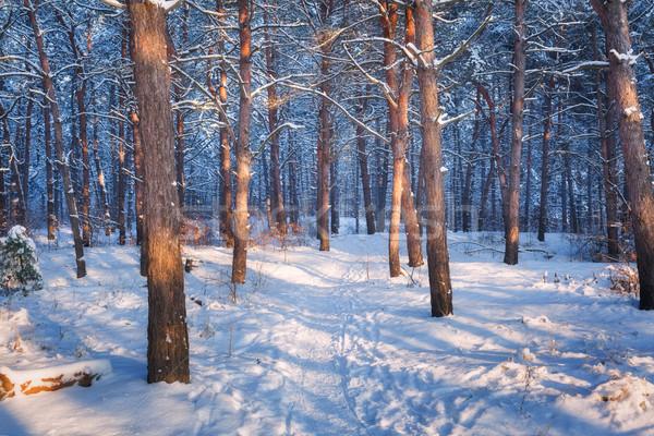 Kleurrijk landschap bomen parcours winter bos Stockfoto © denbelitsky