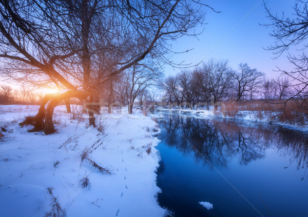 Inverno panorama alberi fiume tramonto foresta Foto d'archivio © denbelitsky