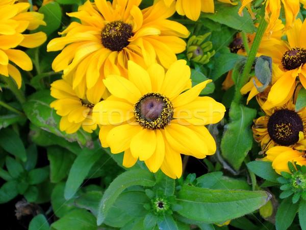 Flores resumen primer plano foto naturaleza jardín Foto stock © dengess