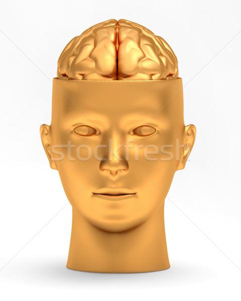 Gold brain in gold head Stock photo © dengess