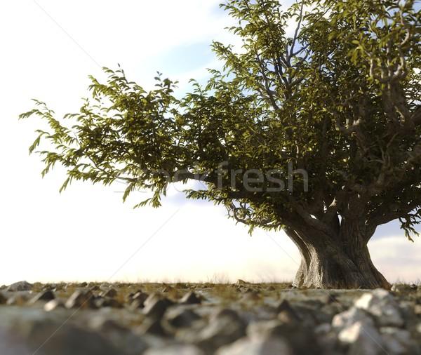 árbol desierto rock paisaje 3d cielo Foto stock © denisgo
