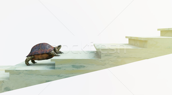 moving turtle wants to climb on the stairs concept background Stock photo © denisgo