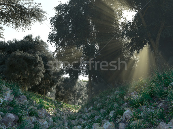Beautiful sunbeams in green forest background Stock photo © denisgo